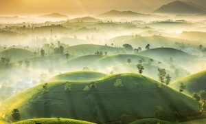 Photo of Vietnam tea hills shortlisted in international contest